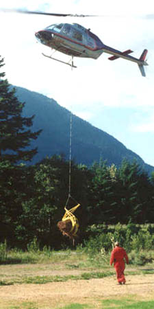 Fandrich aerial grapple carrying logs